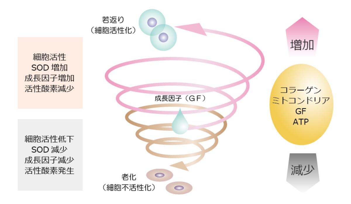 細胞活性対策の模式図