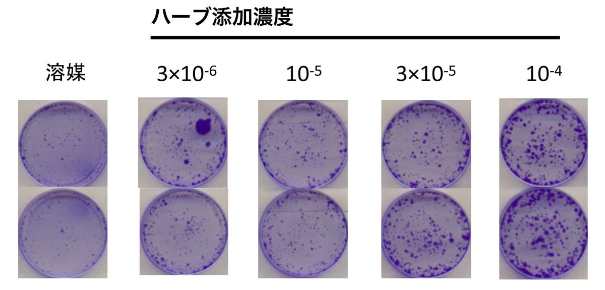 細胞活性対策実験結果