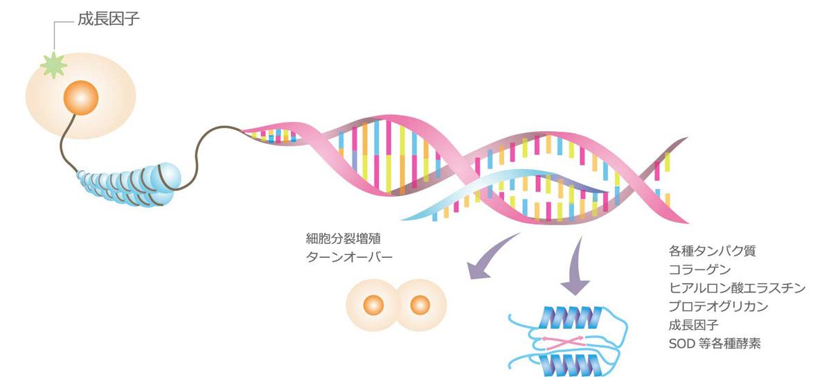 細胞代謝の模式図2